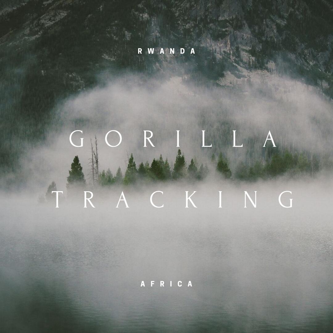 Gorillia Tracking